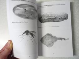 Een voorbeeld uit de zwart-wit editie.